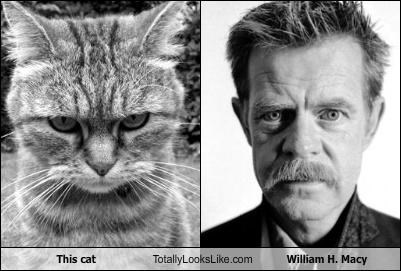 This cat Totally Looks Like William H. Macy