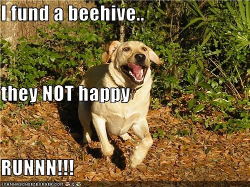 I fund a beehive.. they NOT happy RUNNN!!!