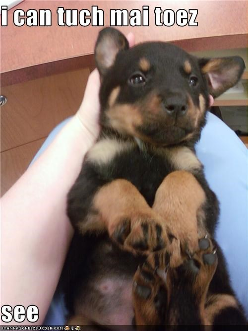 exercise,puppy,rottweiler,stretch,toes