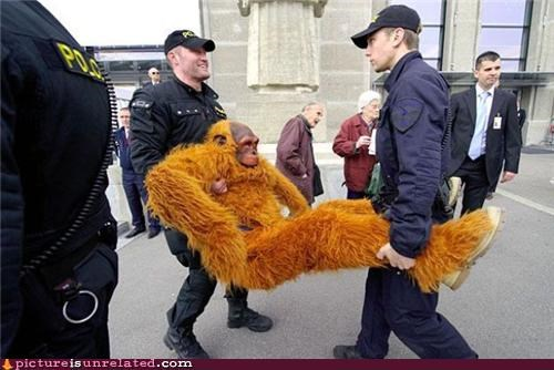 arrest,costume,monkey,police,suit,wtf