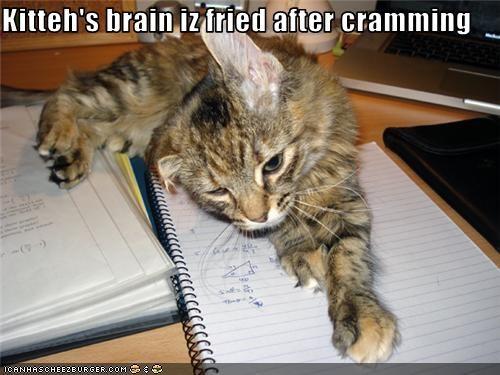 Kitteh's brain iz fried after cramming