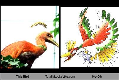 This Bird Totally Looks Like Ho-Oh