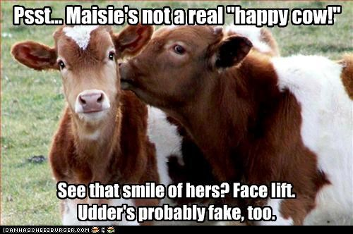 "Psst... Maisie's not a real ""happy cow!"""