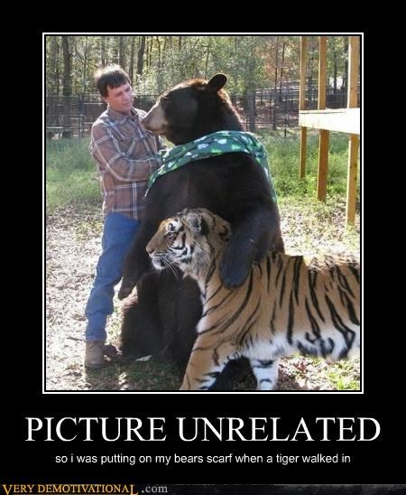 animals,bear,Forest,Pure Awesome,some guy,tiger,unrelated,wtf