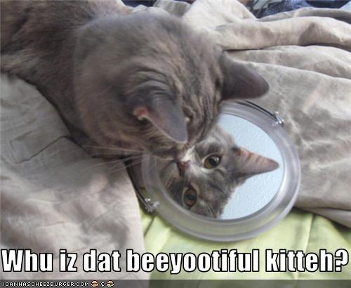 Whu iz dat beeyootiful kitteh?