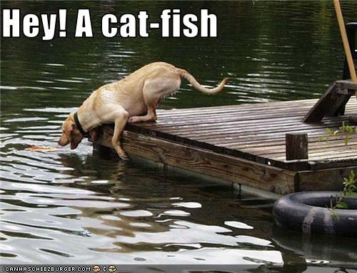 Hey! A cat-fish