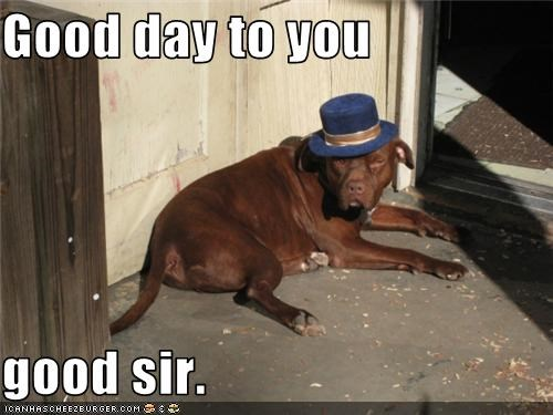british accent,good day,good sir,mean look,mixed breed,pit bull,top hat