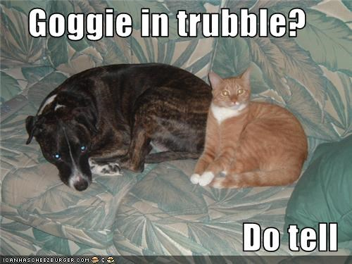 Goggie in trubble?   Do tell