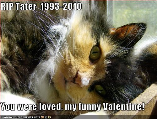 RIP Tater  1993-2010  You were loved, my funny Valentine!