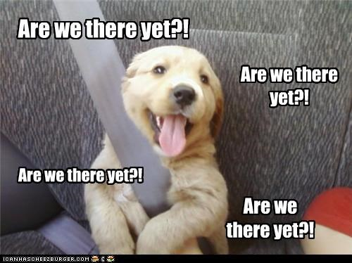 are we there yet,car,dogs,golden retriever,puppy,seatbelt