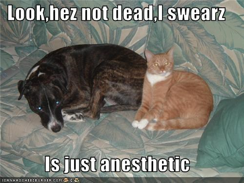 Look,hez not dead,I swearz  Is just anesthetic