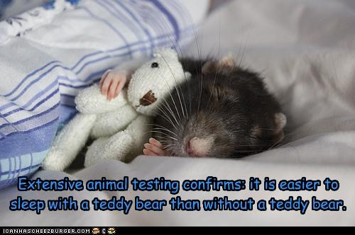 Extensive animal testing confirms: it is easier to sleep with a teddy bear than without a teddy bear.