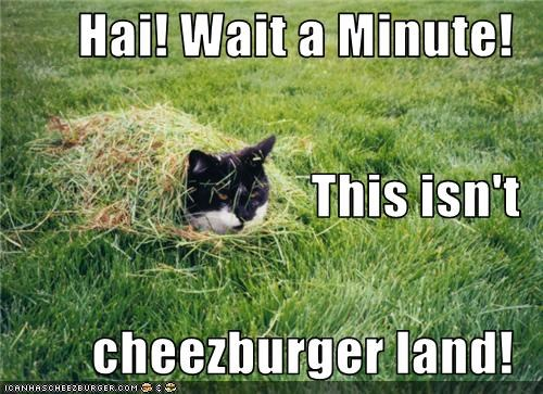 Hai! Wait a Minute! This isn't cheezburger land!