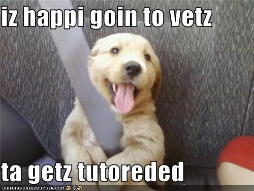 iz happi goin to vetz  ta getz tutoreded