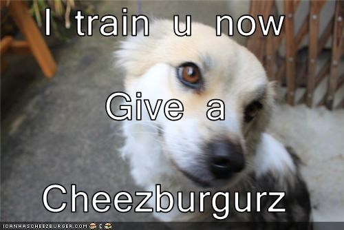 I train u now Give a  Cheezburgurz