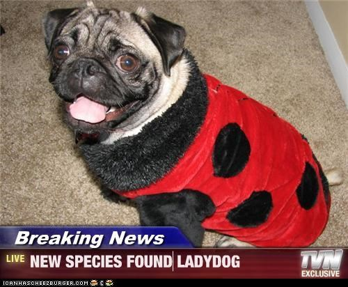 Breaking News - NEW SPECIES FOUND LADYDOG