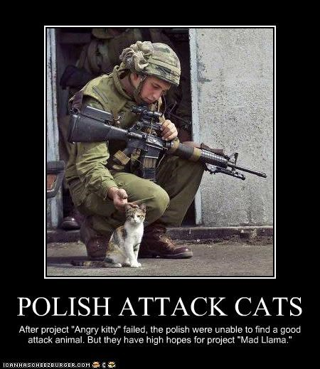POLISH ATTACK CATS