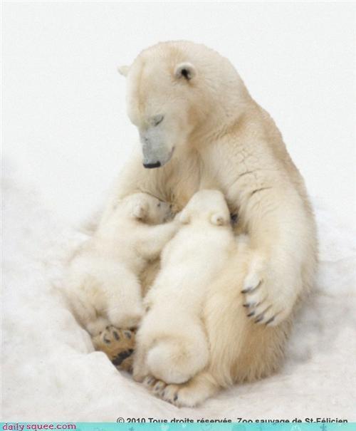 Polar Snuggles