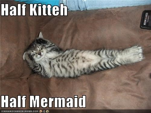 Half Kitteh   Half Mermaid