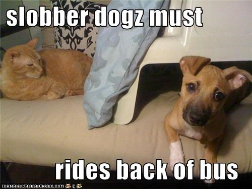 slobber dogz must   rides back of bus