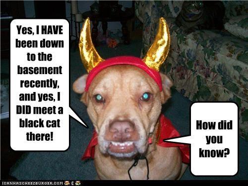 basement,costume,devil,evil,pit bull