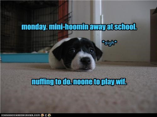 monday. mini-hoomin away at school.       nuffing to do. noone to play wif.