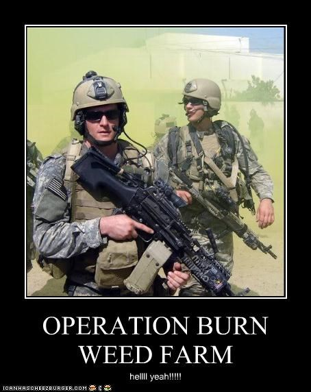 OPERATION BURN WEED FARM