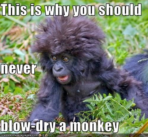 This is why you should never blow-dry a monkey
