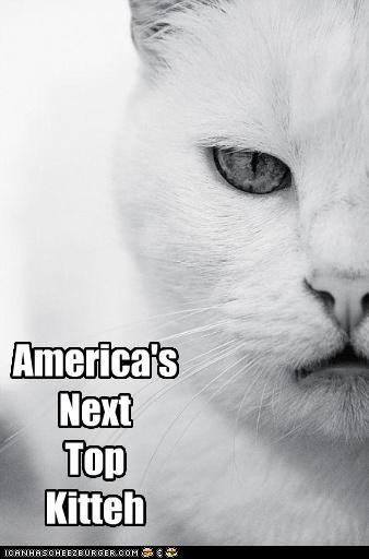 America's  Next Top Kitteh