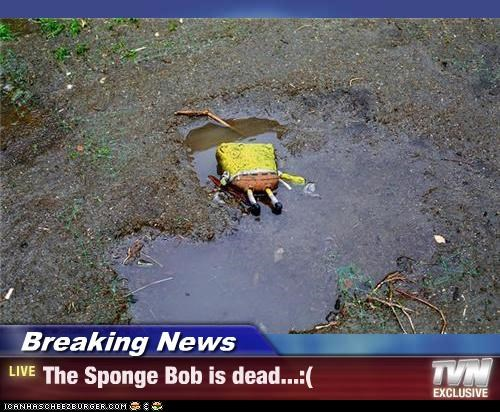 Breaking News - The Sponge Bob is dead...:(