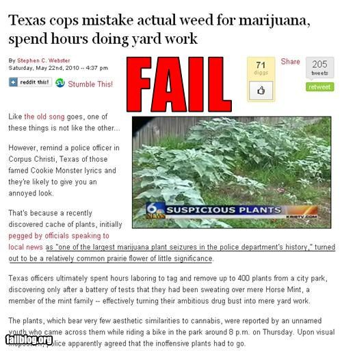 Marijuana Bust Fail