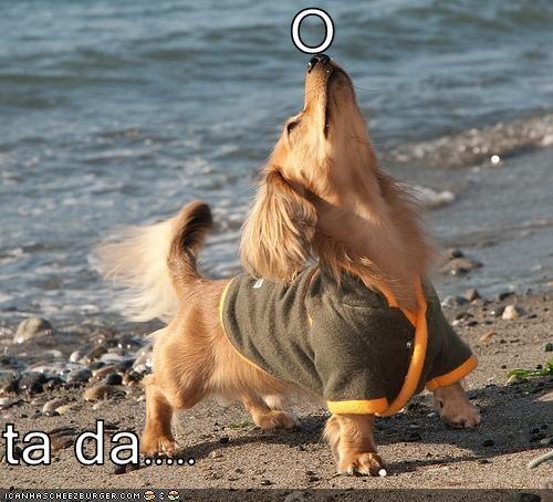 balance,beach,golden retriever mix,nose,trick