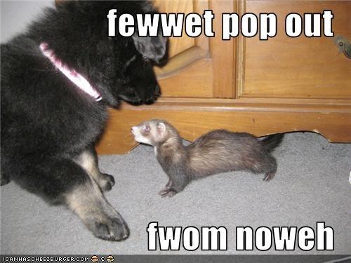 fewwet pop out  fwom noweh