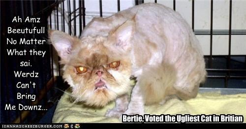 Bertie, Voted the Ugliest Cat in Britian