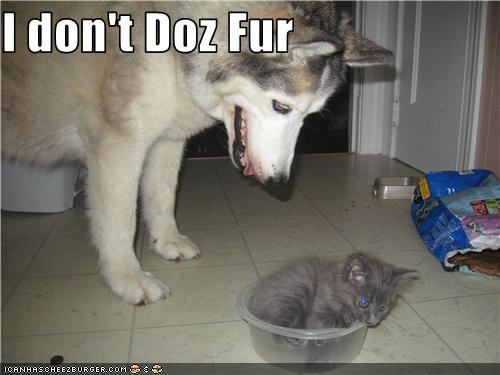 I don't Doz Fur