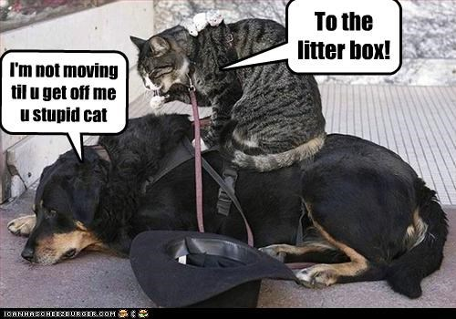 To the litter box!