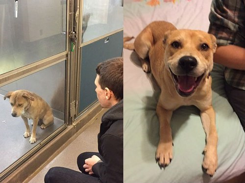 These 6 Before and After Images of Adopted Pets Show the 'Difference a Day Can Make'