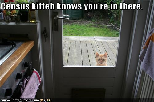 Census kitteh knows you're in there.