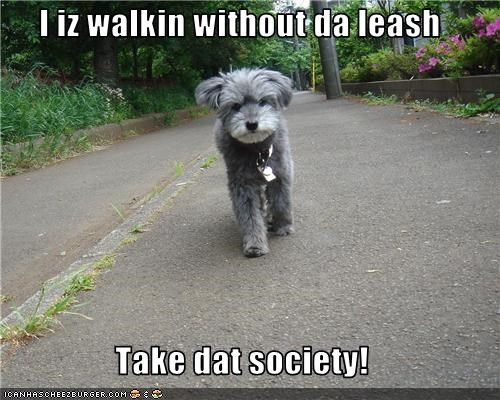 I iz walkin without da leash  Take dat society!