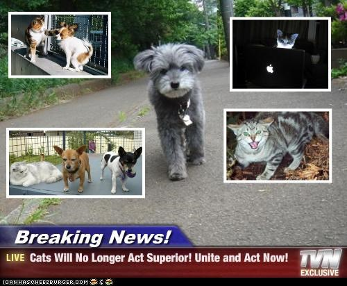 Breaking News! - Cats Will No Longer Act Superior! Unite and Act Now!