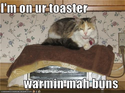 I'm on ur toaster  warmin mah buns