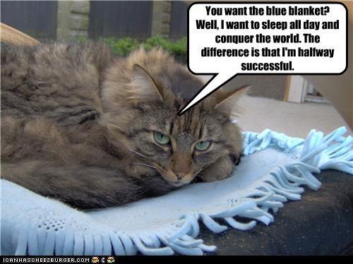 blanket,nap,selfish,world domination
