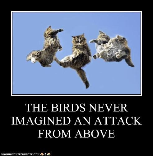 THE BIRDS NEVER IMAGINED AN ATTACK FROM ABOVE