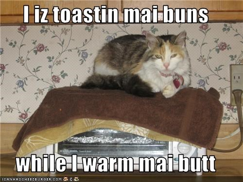 I iz toastin mai buns  while I warm mai butt