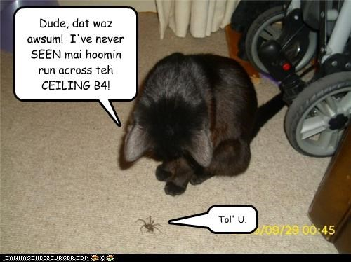 Dude, dat waz awsum!  I've never SEEN mai hoomin run across teh CEILING B4!