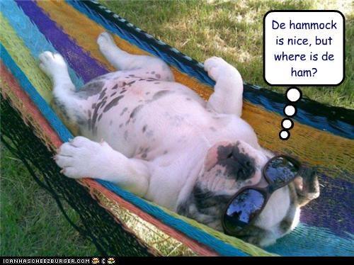 english bulldog,hammock,relax,sleep,sunglasses