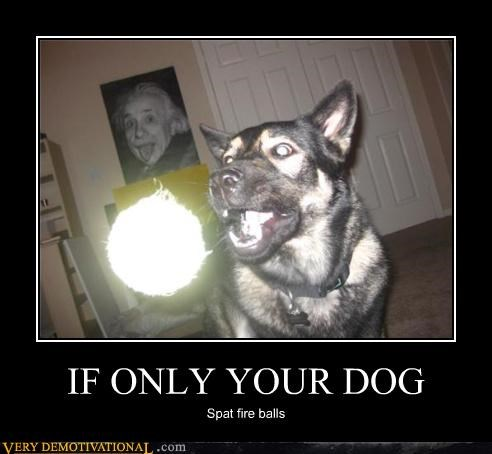 IF ONLY YOUR DOG