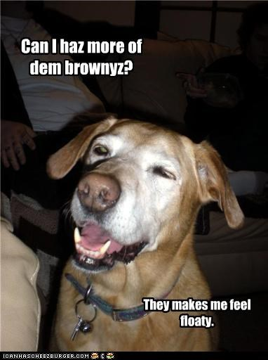 Can I haz more of dem brownyz?