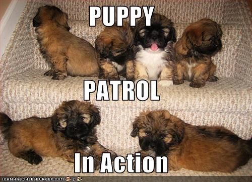 PUPPY PATROL In Action