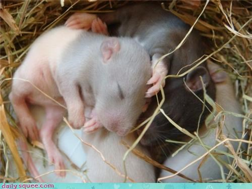 A Nest of Sleek Squee